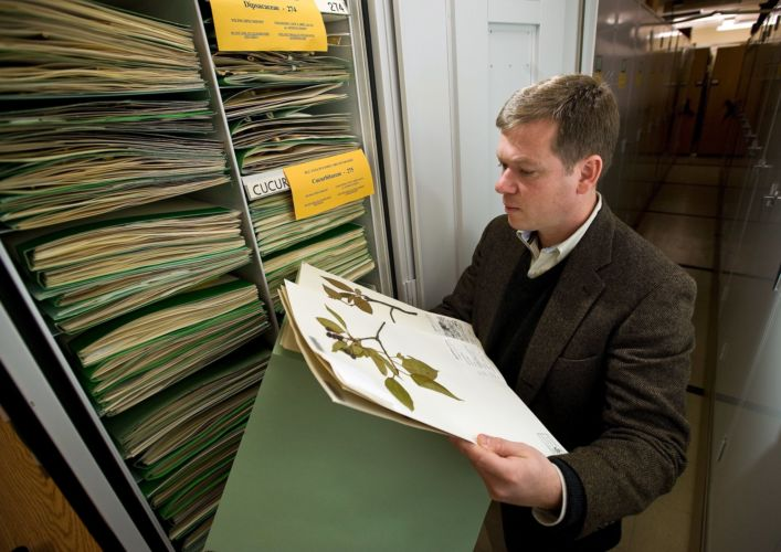 Ken Cameron, director of the Wisconsin State Herbarium, examining specimens